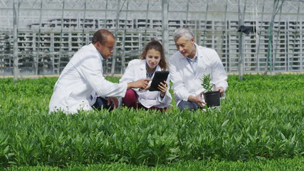 Workers in agriculture and science industry checking the plants in large nursery