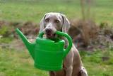 Hund mit Gießkanne