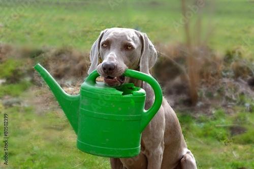 Staande foto Dragen Hund mit Gießkanne