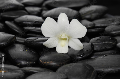 Poster Spa Single white orchid on black pebbles