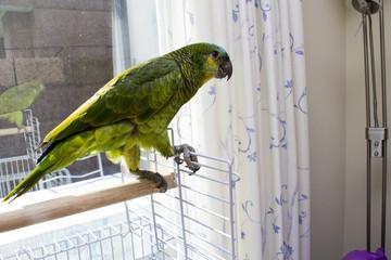 Parrot in terrraza