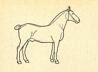 Horse (stallion)