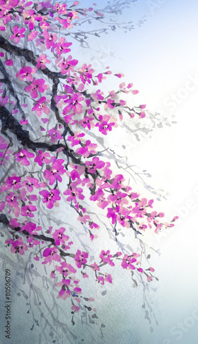 Watercolor painting. Branches of blossoms cherry - 80506709