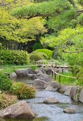 Natural Japanese green garden in summer season