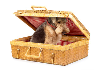Cane in valigia - A dog in the bag