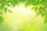 Fototapety Green beech leaves background, vector illustration