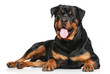 Rottweiler lying on white background - 80512914