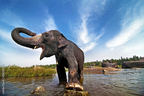 Tuinposter Olifant Indian elephant