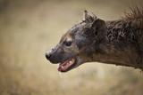 iena in caccia