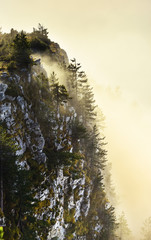 Rocky cliff with forest emerging in the mist