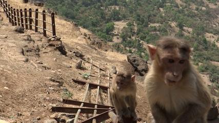 Baby Monkeys in a Forest
