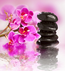 beautiful gorgeous orchid and wet stones