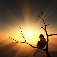 日の出と猿