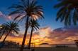 Mallorca sunrise in Magaluf Palmanova beach - 80522146