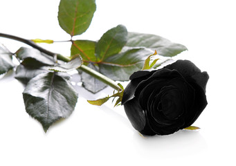 Black roses on a white background.