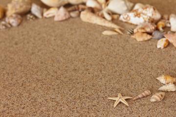 Seestern Muscheln Sand Strand