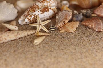 Seestern Muscheln Schnecken Sand Textfreiraum