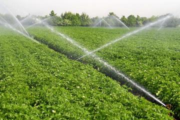 LandwirtschaftDuerreBeregnung