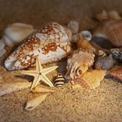 Seestern Muscheln Schnecken Sand Sonne