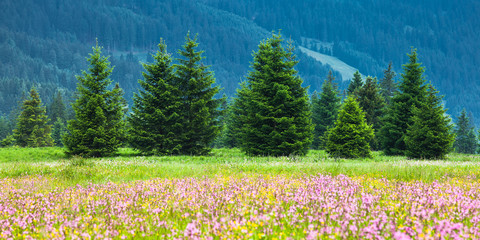 Spring Alpine Meadow