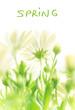 Spring fresh flowers