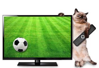 Cat watching smart tv translation of football game.