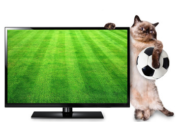 Cat watching smart tv translation of football game.