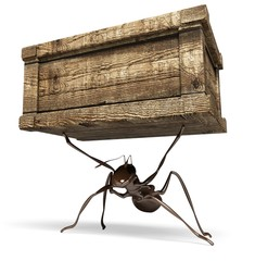 Ant. 3D. Ant Carrying a Box
