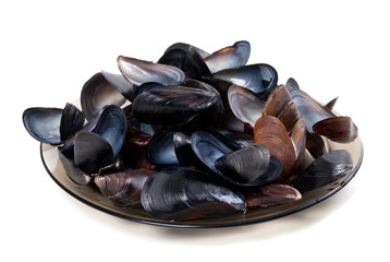 Shells of mussels on glass plate