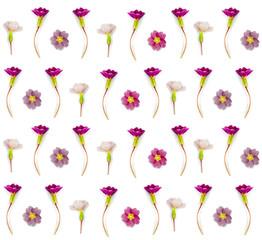 Herbarium pattern