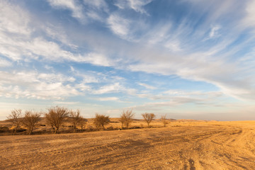 Oasis in the Negev desert, Israel