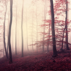 Fantasy marsala color woodland © robsonphoto