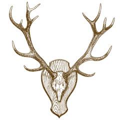 engraving  illustration of animal skull