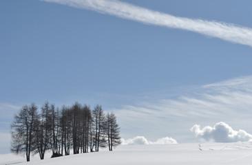 larici contro il cielo