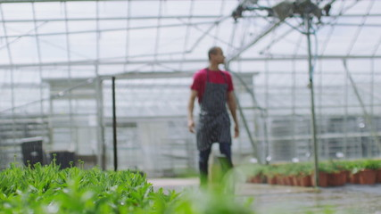 Worker in the agricultural industry checking the plants in a large greenhouse