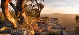 Australian Bush Landscape - 80552933