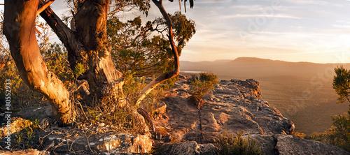 Poster Australië Australian Bush Landscape