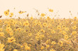 yellow flower field meadow vintage retro - 80553348