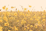 yellow flower field meadow vintage retro