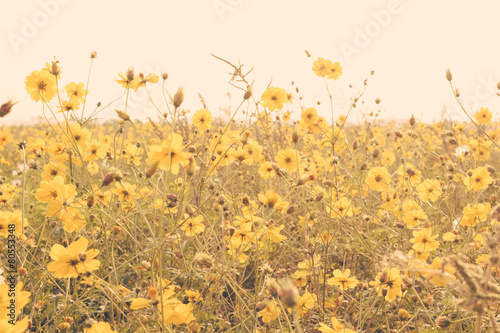 Deurstickers Bloemenwinkel yellow flower field meadow vintage retro