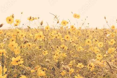 yellow flower field meadow vintage retro - 80553348
