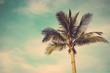 coconut palm tree against blue sky vintage retro
