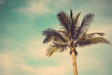 coconut palm tree against blue sky vintage retro