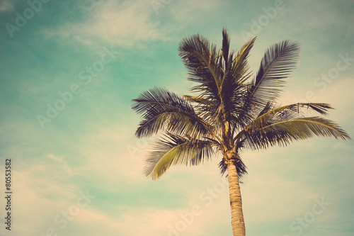 Staande foto Palm boom coconut palm tree against blue sky vintage retro