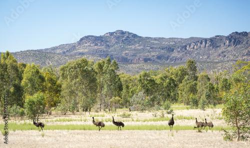 Plexiglas Struisvogel Emu