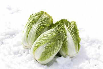 雪下野菜 白菜