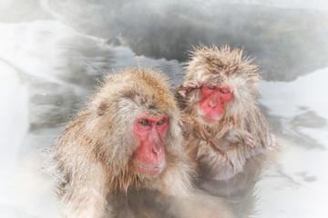 温泉に入るおさるさん snow monkey japan