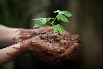 Hands holding a young green plant