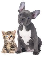 Junge Katze mit Welpe