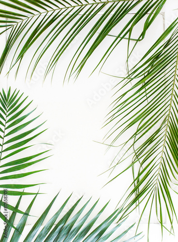 Deurstickers Palm boom areca palm leaves